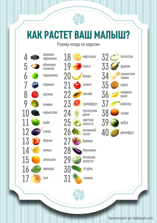 19 неделя беременности - вес и размер плода, фото, УЗИ