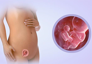 При беременности член потерялся во влагалище