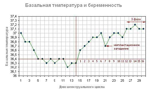 Базальная температура при беременности днем